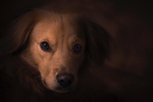 Gratis stockfoto met babyhondje, beest, detailopname. close-up, hond