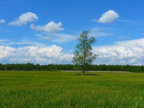 天空, 景觀, 森林, 樹木 的 免費圖庫相片
