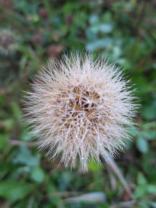 Δωρεάν στοκ φωτογραφιών με δροσιά, καλοκαίρι, λουλούδι, νωρίς το πρωί