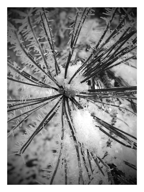 Δωρεάν στοκ φωτογραφιών με παγετός, χειμώνας, χιόνι