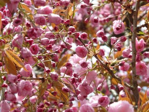 คลังภาพถ่ายฟรี ของ ดอกไม้, พฤกษา, เบ่งบาน