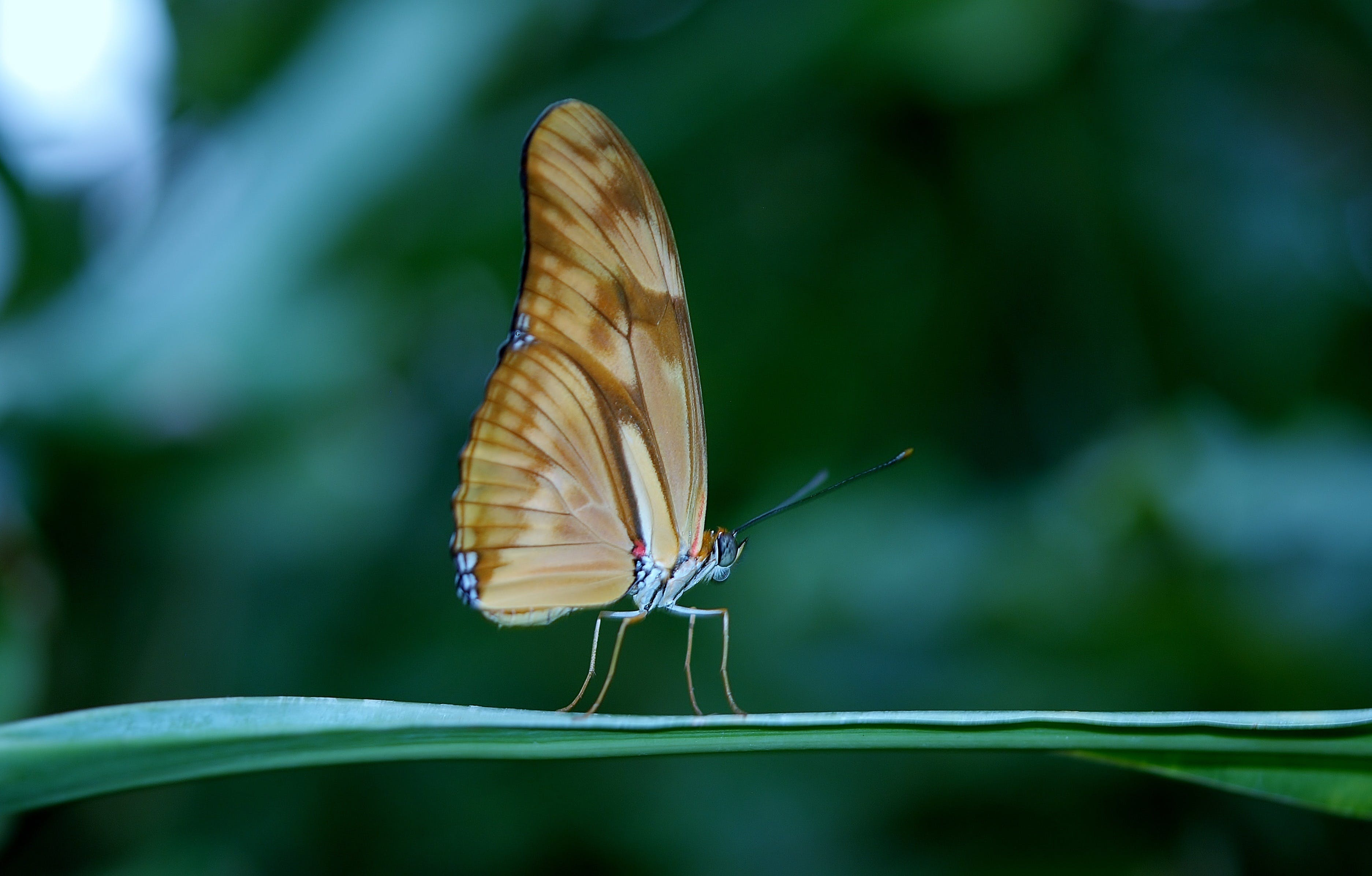 Brown Butterfly on Green Plant Leaf