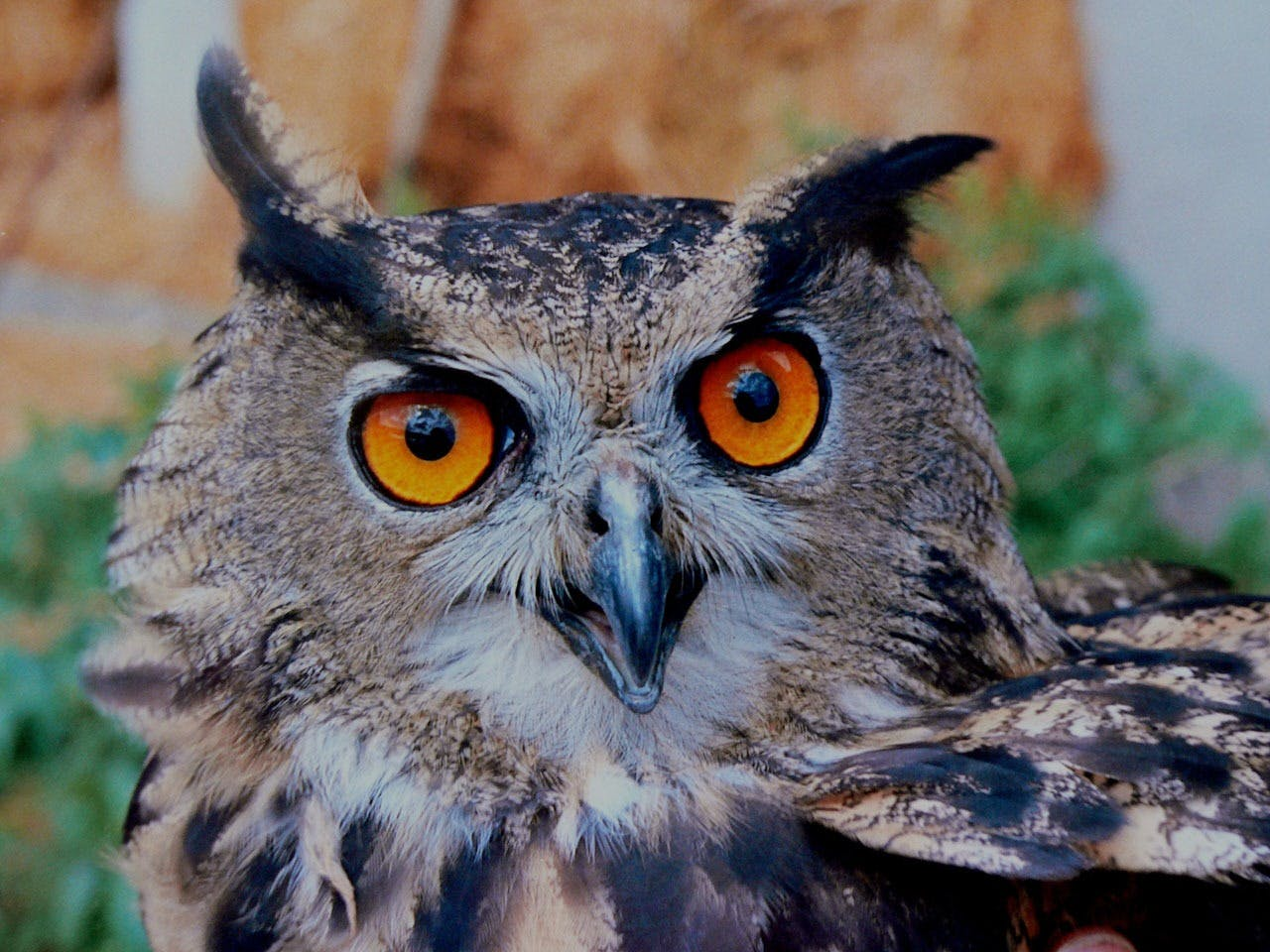 Brown White and Black Owl