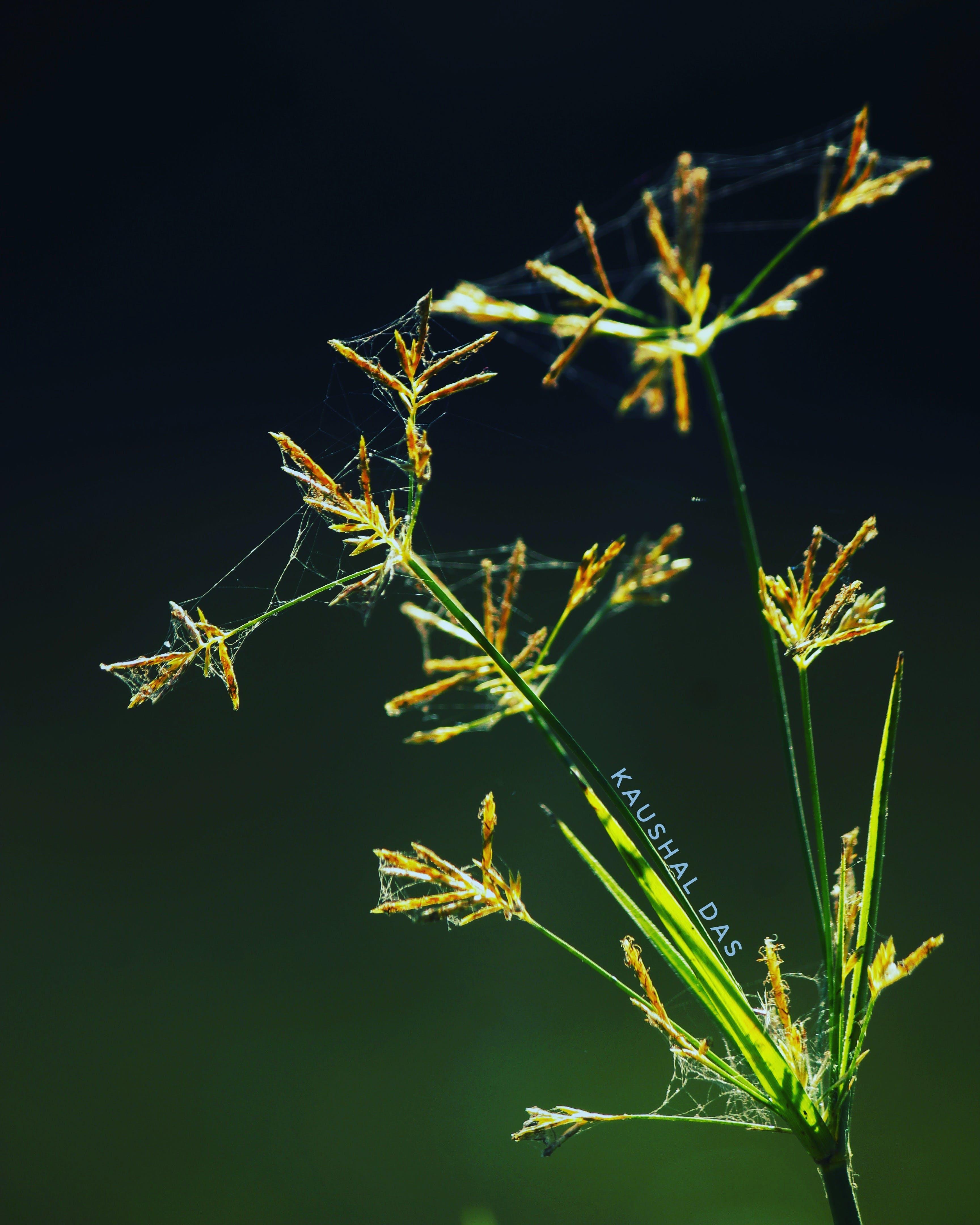 Free stock photo of #herb, #Nature #Photography, macro photo