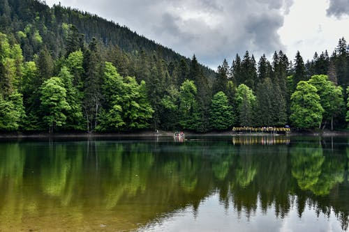 Green Pine Trees Beside Lake Under Cloudy Sky
