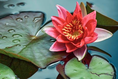 Darmowe zdjęcie z galerii z basen, bilard, botaniczny