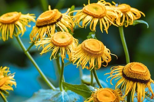 Darmowe zdjęcie z galerii z botaniczny, dziki, flora