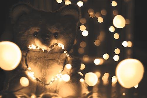 Základová fotografie zdarma na téma osvětlený, plyšová hračka, plyšový medvídek, srdce