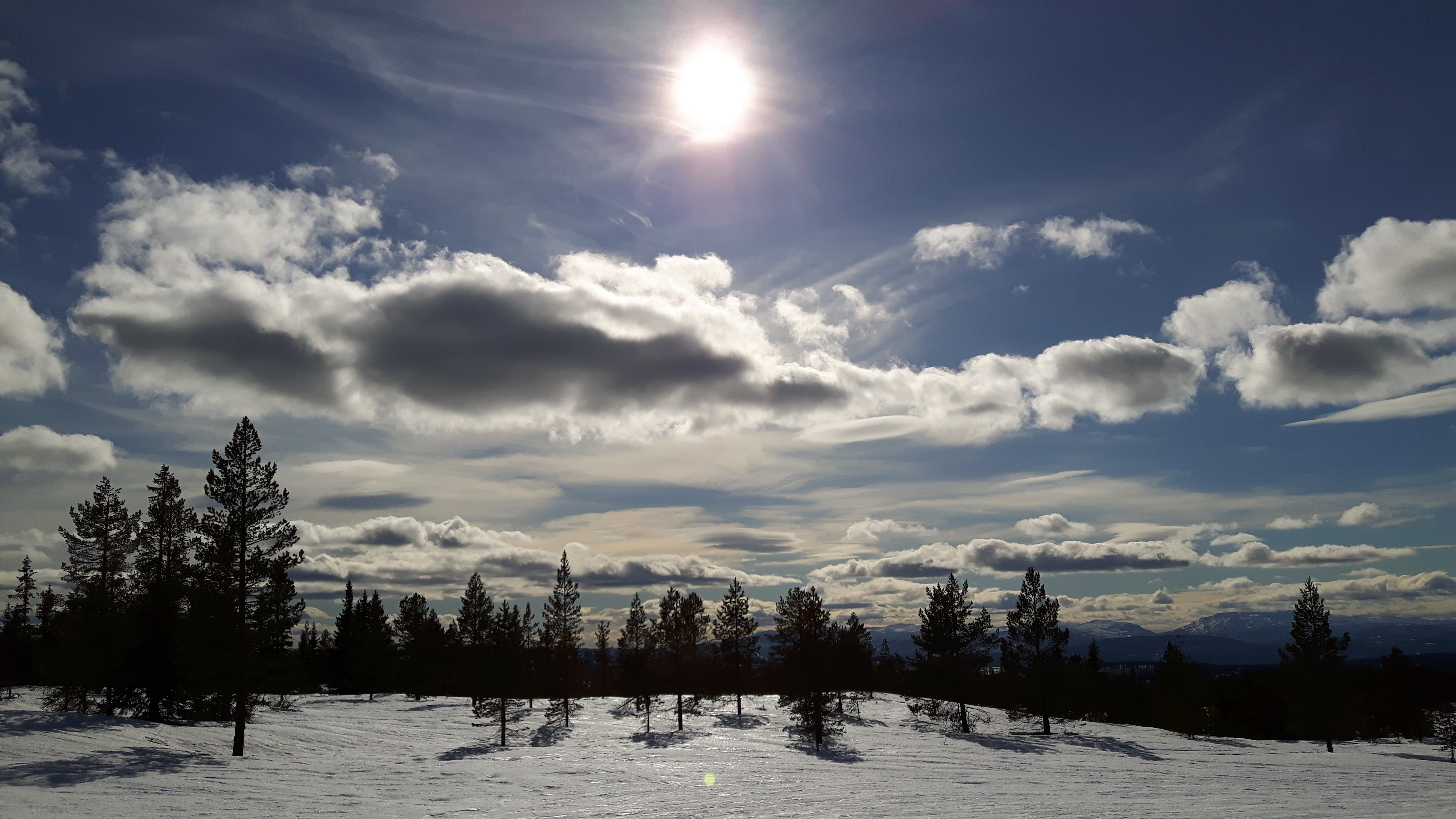 Snowfield With Trees over Clear Blue Skies during Day Time