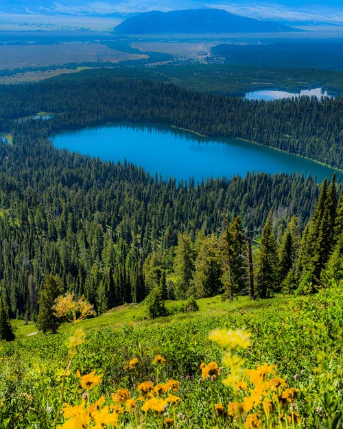 Green Trees and Yellow Flowers Near Blue Lake Under Blue Sky