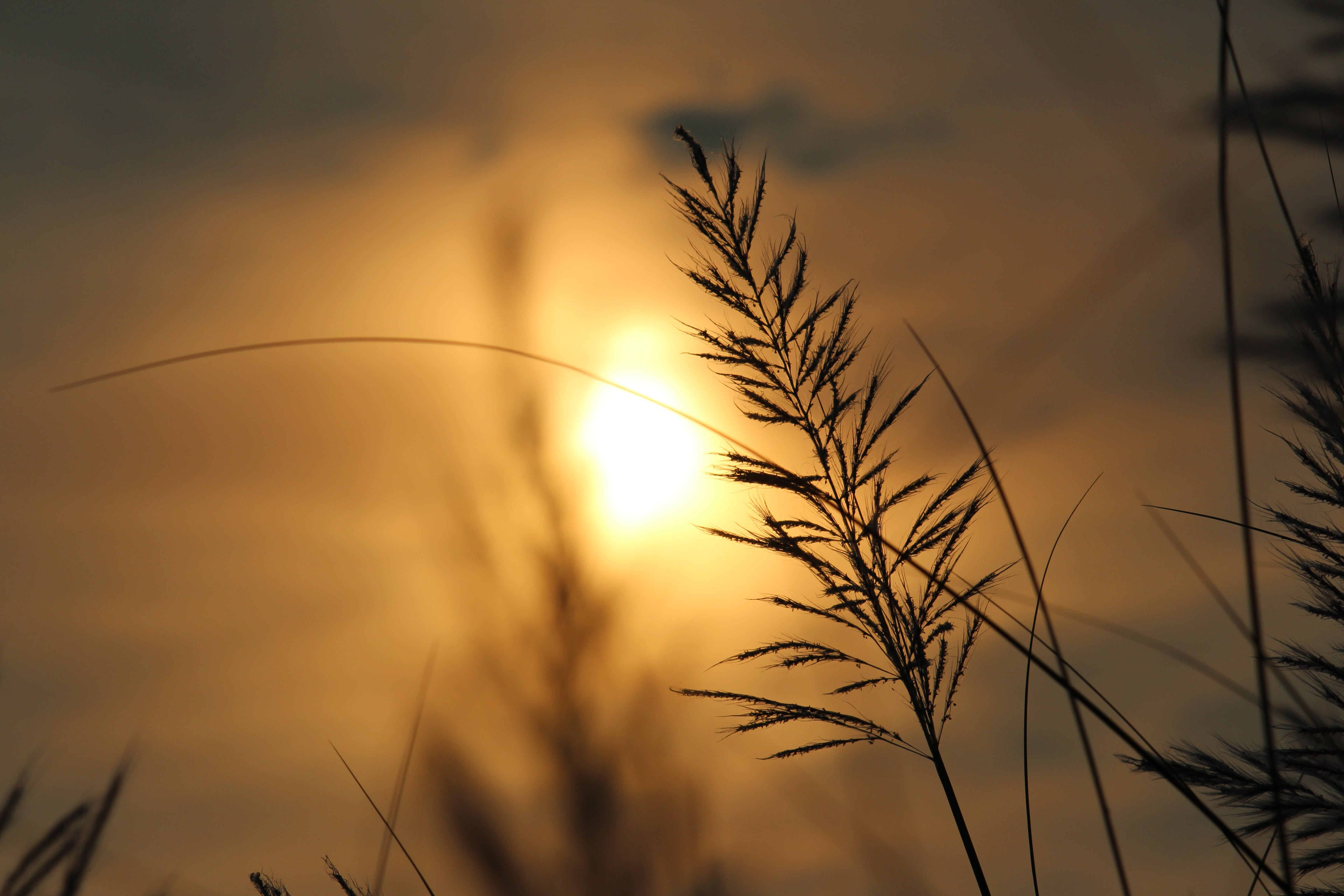 Silhouette of Plant