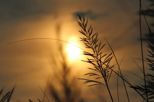 Бесплатное стоковое фото с вечер, закат, камыш, легкий