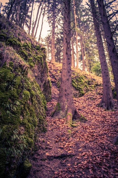 Photos gratuites de arbre, chemin forestier, colline, forêt