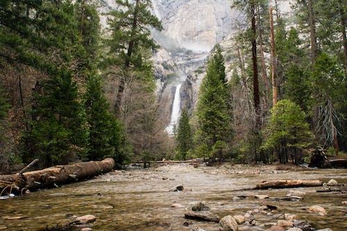 Kostnadsfri bild av natur, skog, träd, vattenfall