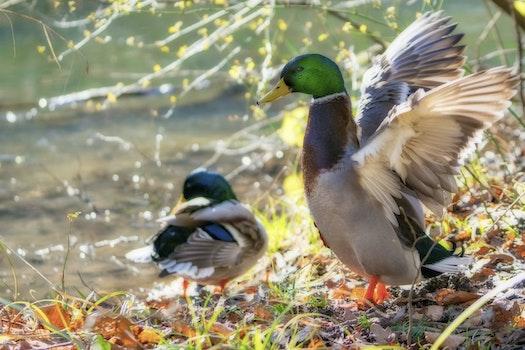 Free stock photo of nature, water, animal, lake