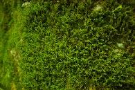 moss, plant, plants