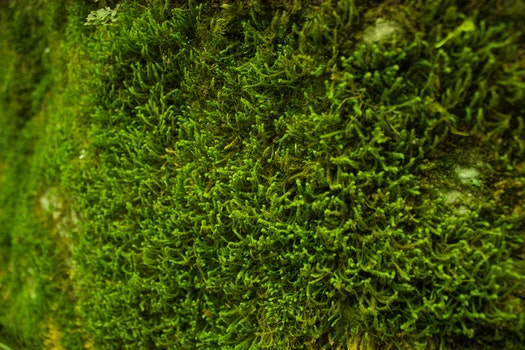 Free stock photo of moss, plant, plants, green