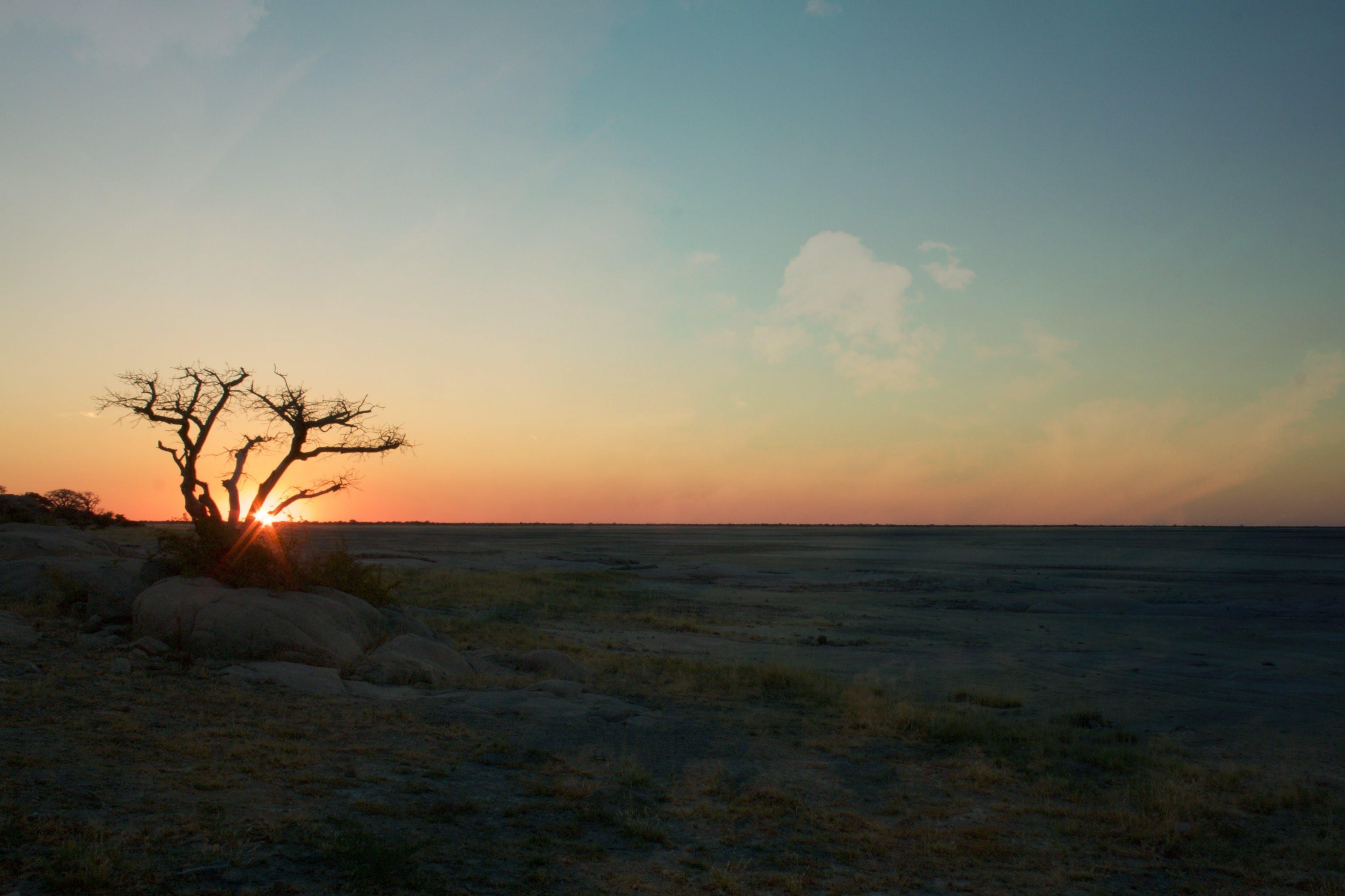 ağaç, doğa, gün batımı