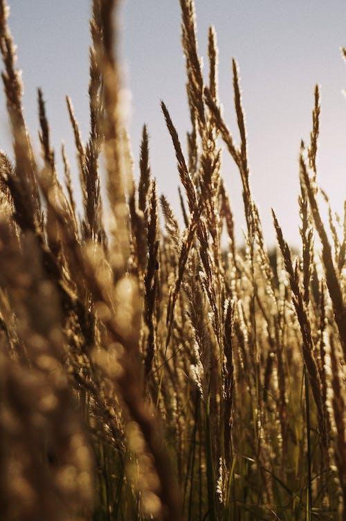 Fotobanka sbezplatnými fotkami na tému denné svetlo, exteriéry, poľnohospodárstvo