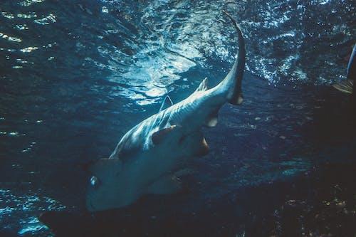 깊은 바다, 맑은 물, 물고기, 불빛의 무료 스톡 사진