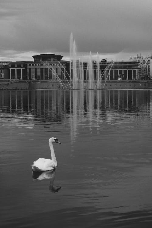 Fotobanka sbezplatnými fotkami na tému architektúra, bazén, cestovať