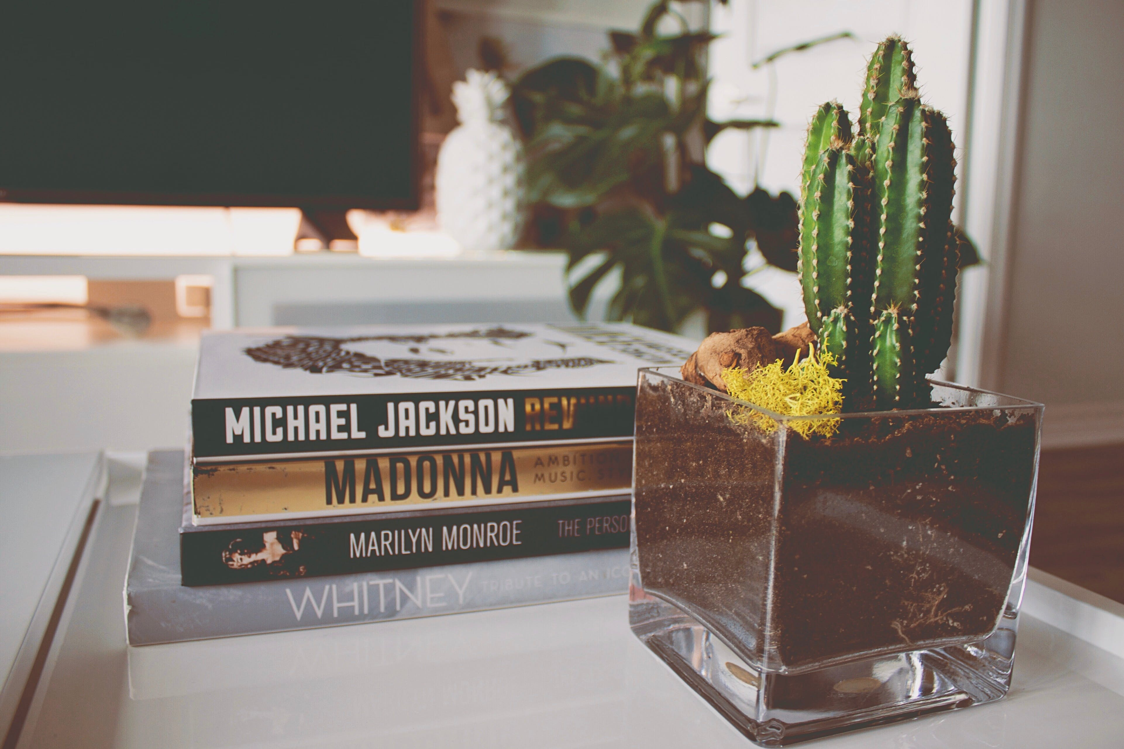 Kostenloses Stock Foto zu bücher, buchstapel, kaffetisch, kaktus
