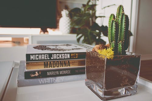 Foto d'estoc gratuïta de cactus, creixement, decoració de la llar, llibres