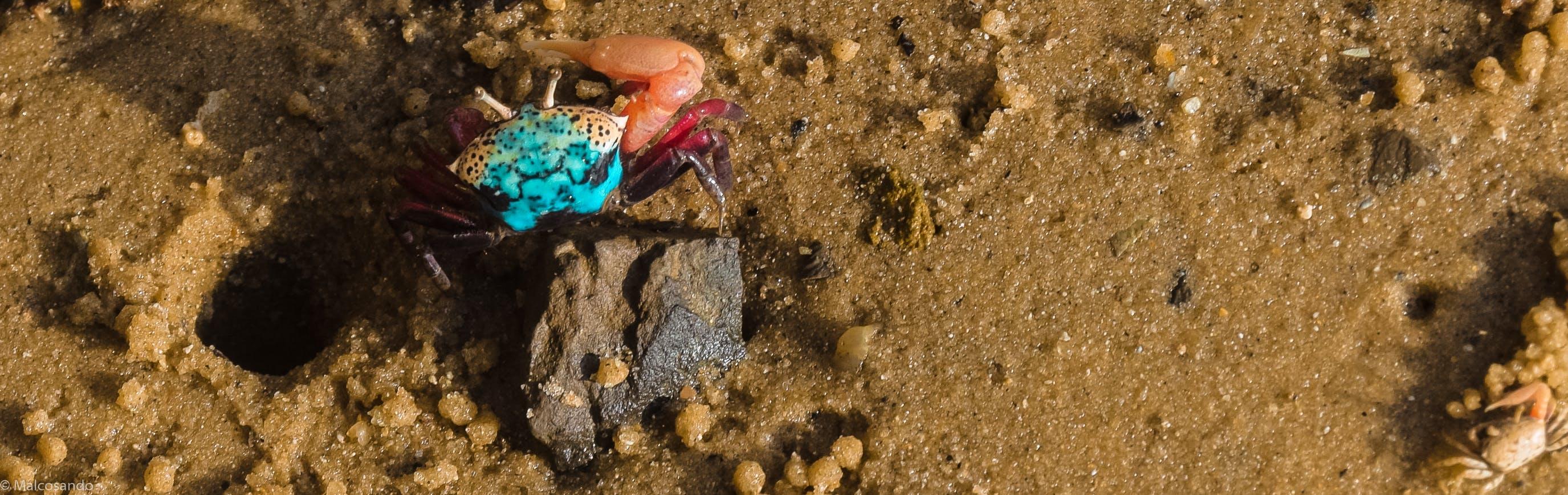 Free stock photo of beach, crab, Kenya, macro photography