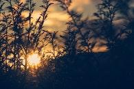 light, nature, sunset