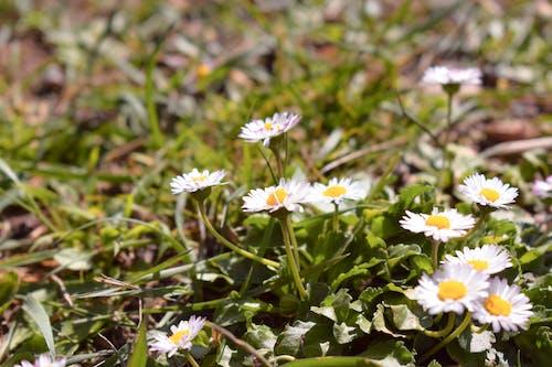 Základová fotografie zdarma na téma divoké květiny, flóra, květiny, rostliny
