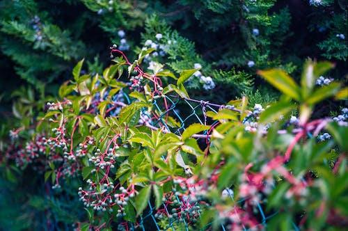계절, 공원, 관목, 나뭇잎의 무료 스톡 사진