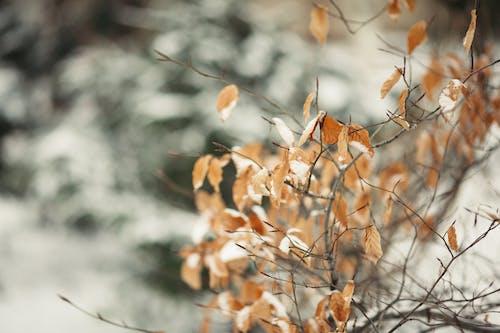 乾的, 冬季, 分公司, 天性 的 免费素材照片