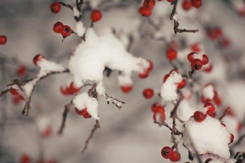 冬季, 冰, 凍結的, 分公司 的 免费素材照片