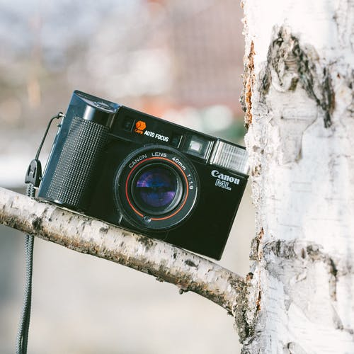 Photos gratuites de analogique, appareil photo, arbre, canon