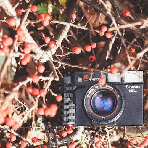 佳能, 指向和射击, 攝影, 相機 的 免费素材照片