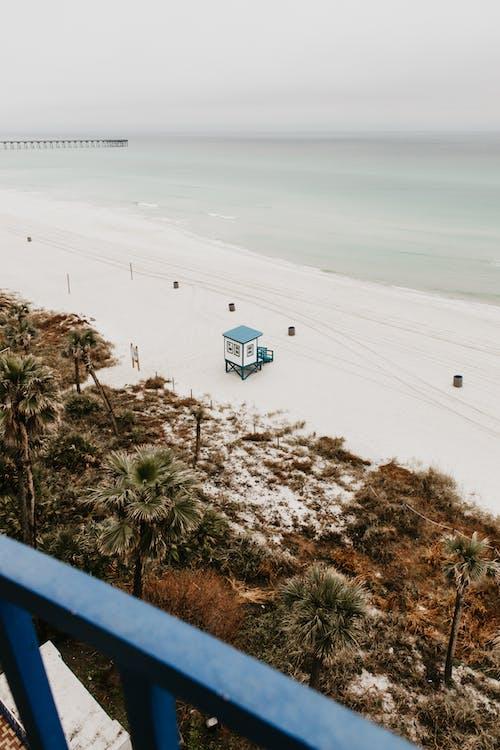 佛羅里達, 假期, 光 的 免费素材图片
