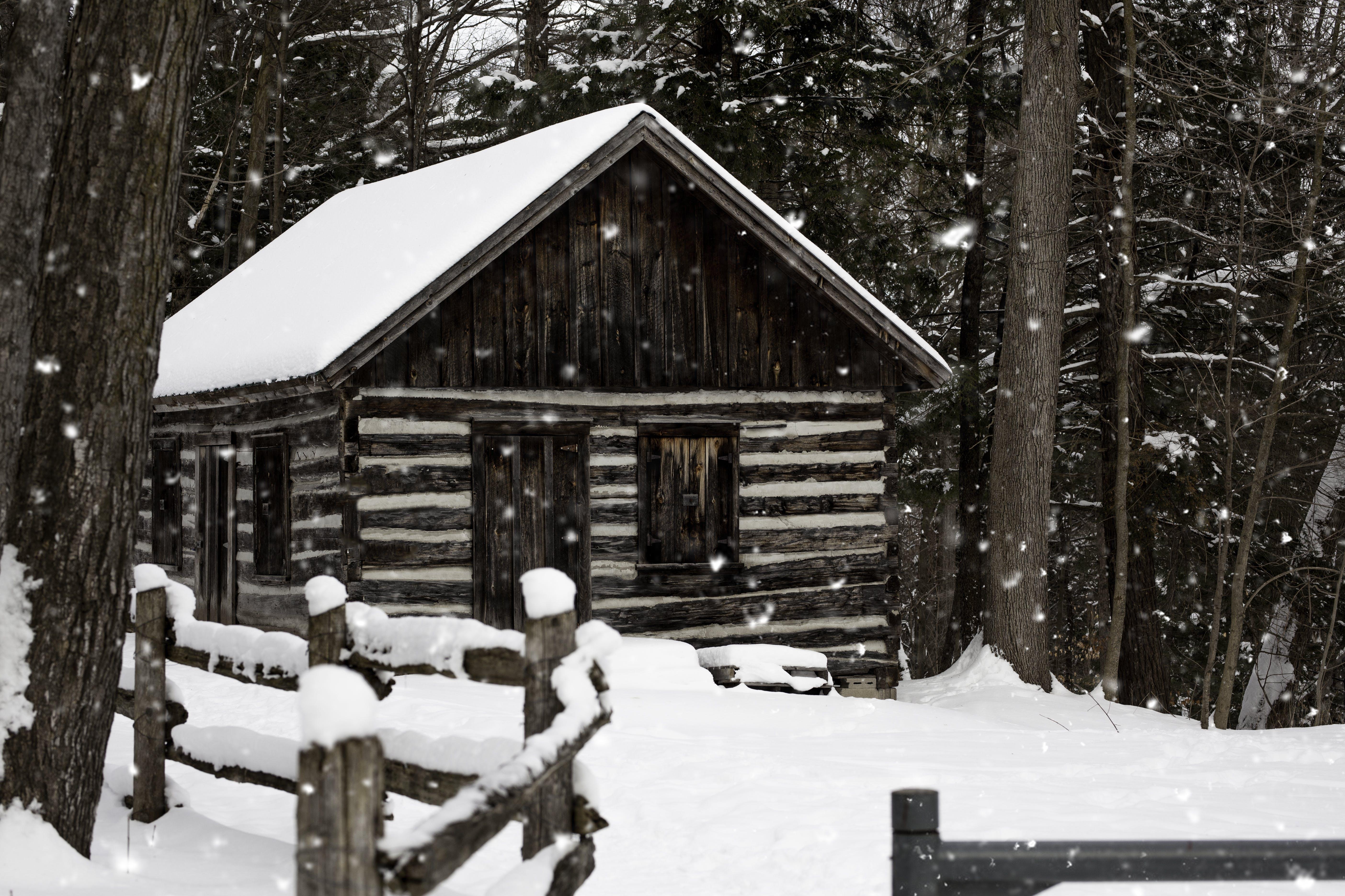 Photos gratuites de arbres, bois, cabane, cabane en bois
