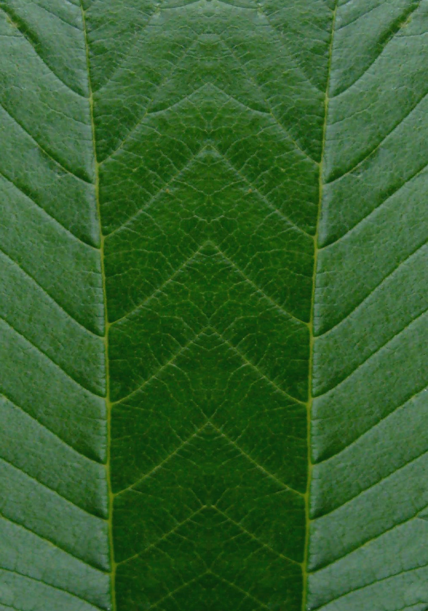 Free stock photo of background, green, leaf, nature