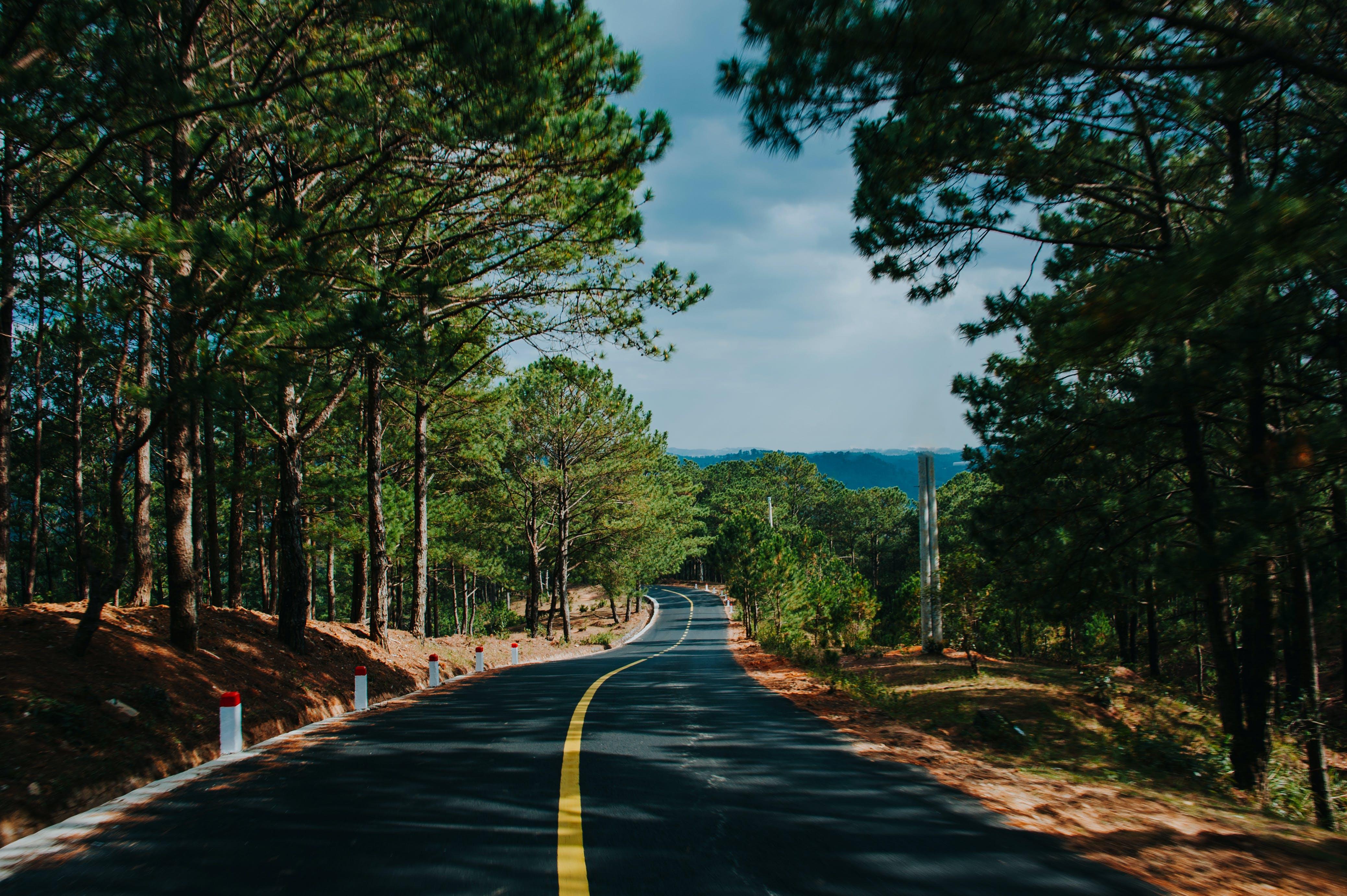 Foto d'estoc gratuïta de alba, arbres, asfalt, autopista