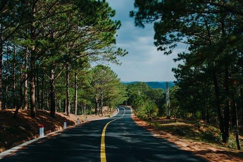Základová fotografie zdarma na téma asfalt, dálnice, denní světlo, dřevo