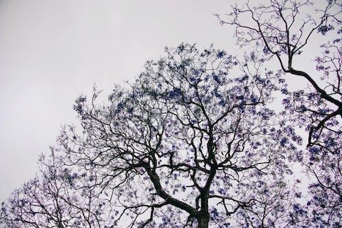 Бесплатное стоковое фото с ветви, выборочная коррекция цвета, дерево, окружающая среда