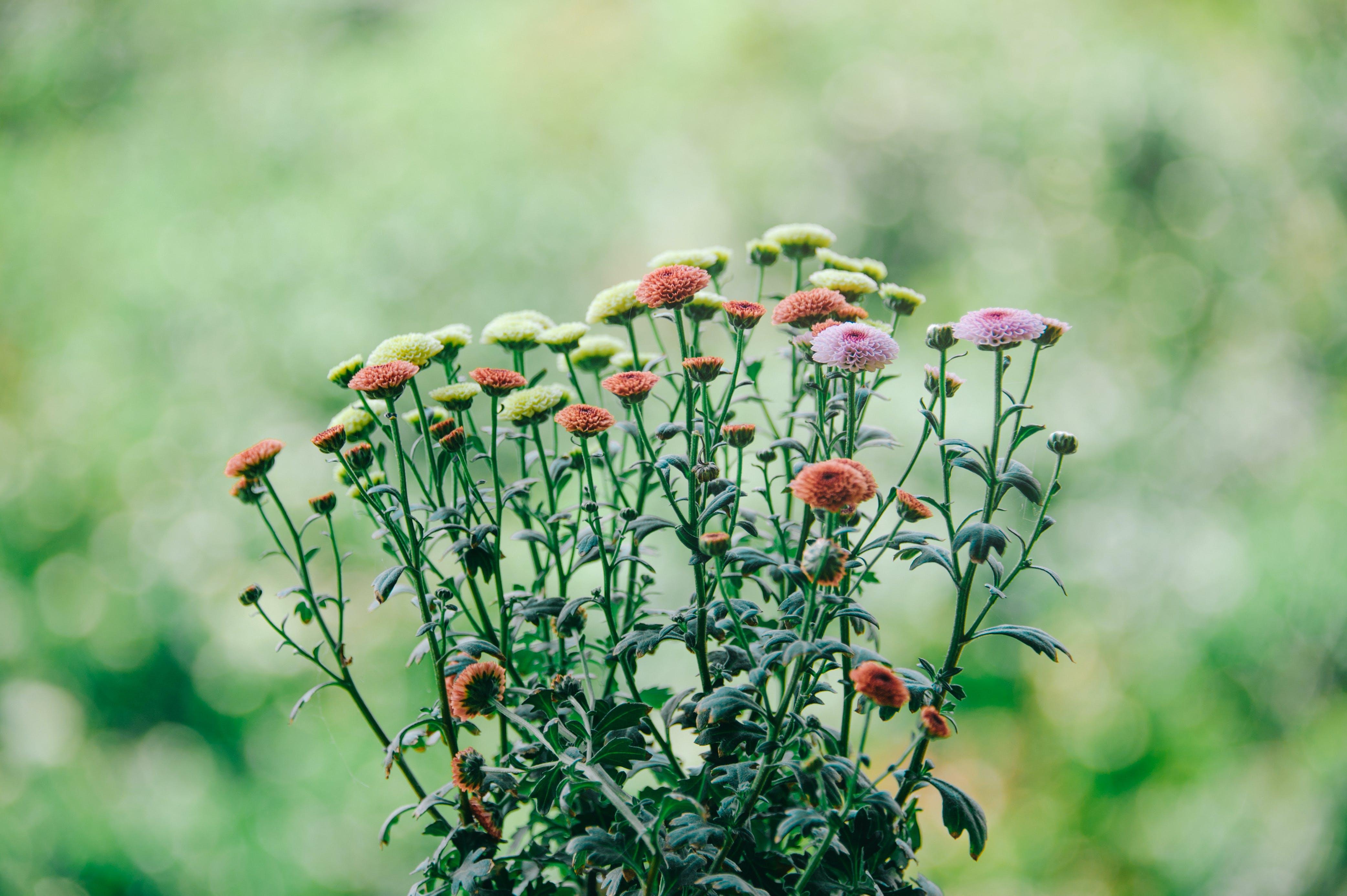 bloeiend, bloemen, delicaat