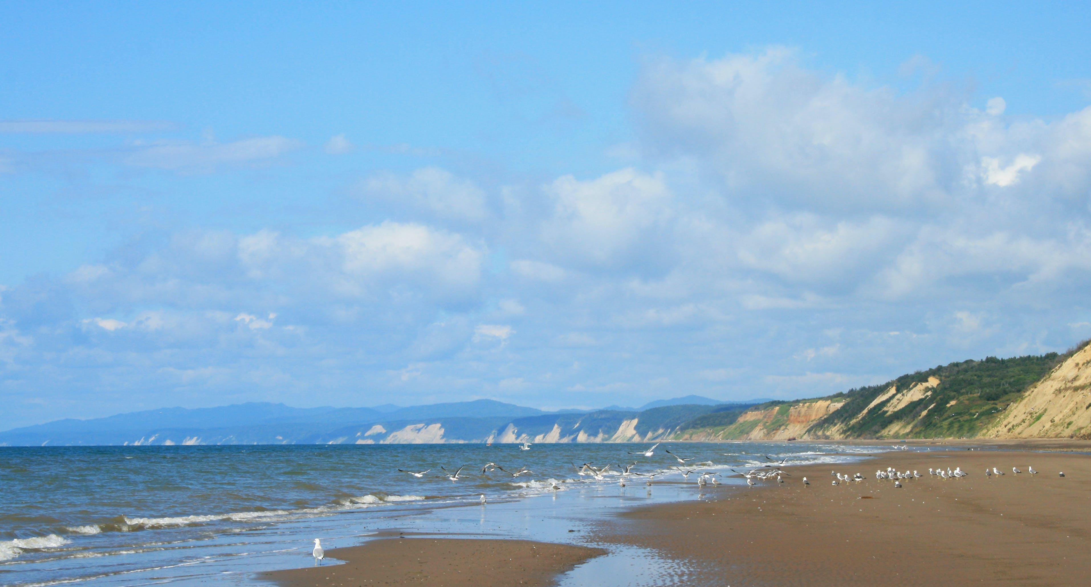 Free stock photo of beach, birds, blue, clouds