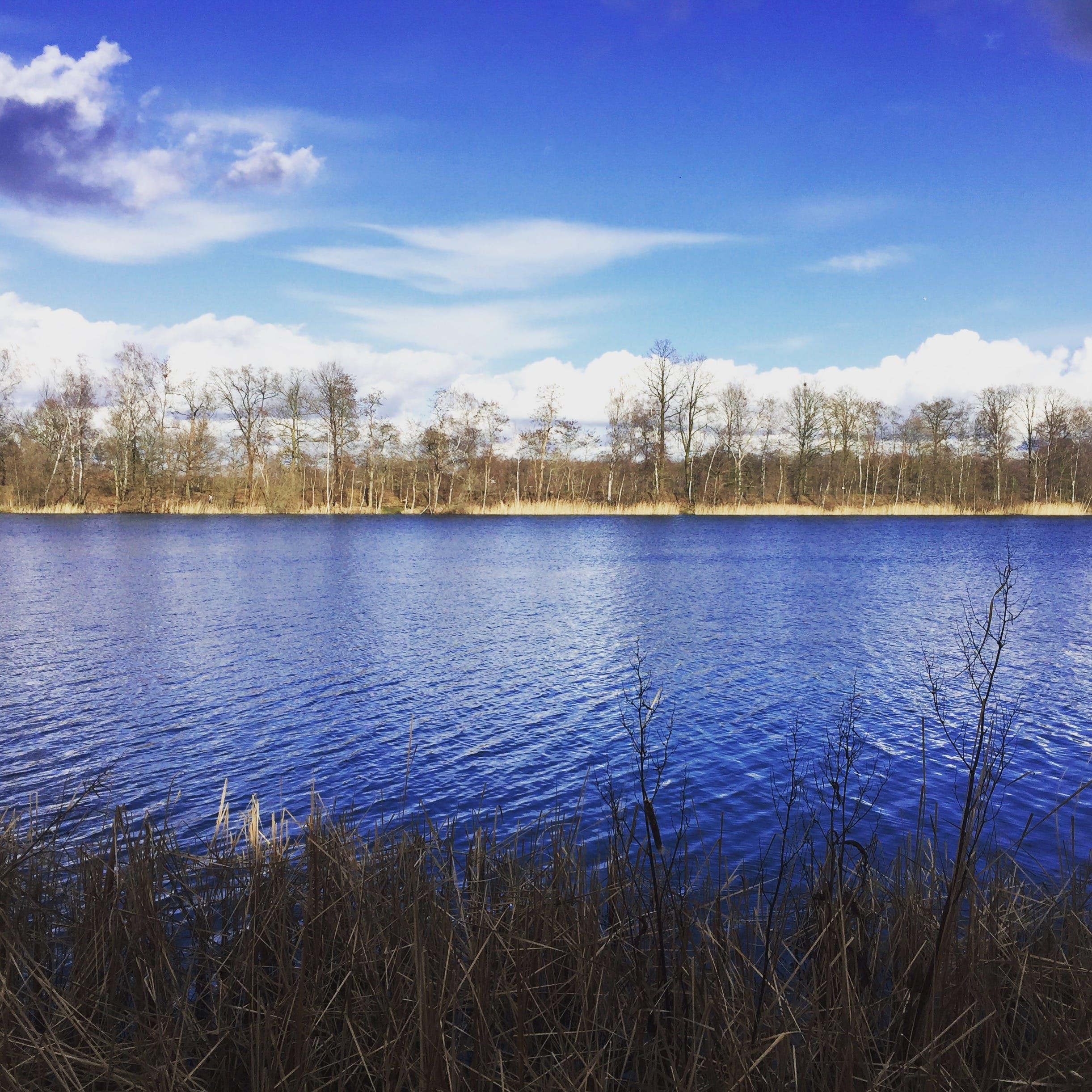 Kostenloses Stock Foto zu bäume, blau, himmel, kristall