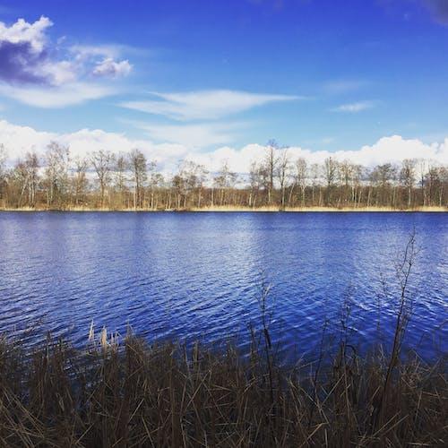 Immagine gratuita di acqua, alberi, azzurro, cielo