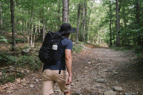 Photos gratuites de activité, arbres, aventure
