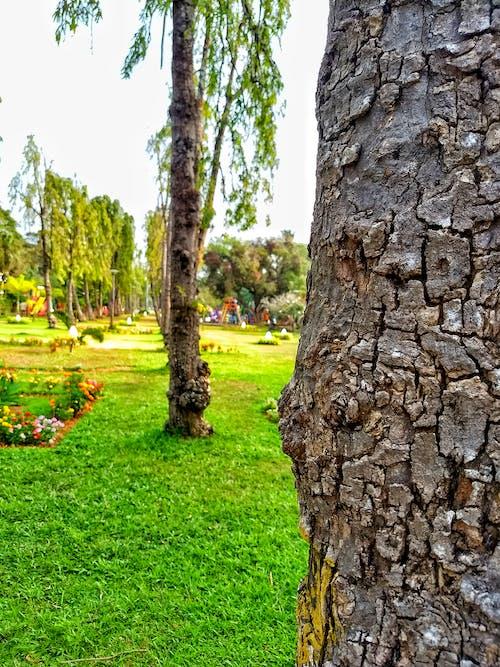 Foto profissional grátis de parque natural