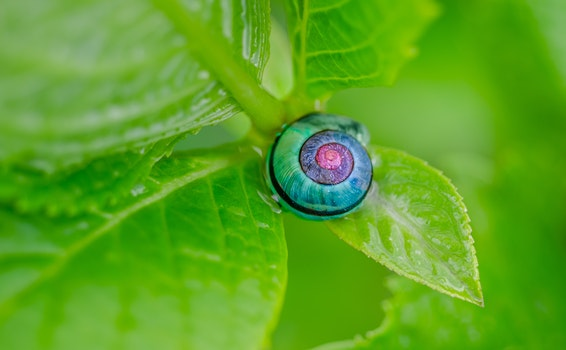 Green Pink and Blue Snail on Top of Green Leaf
