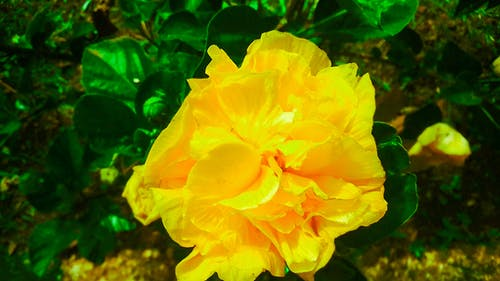 Free stock photo of yellow flower aerial