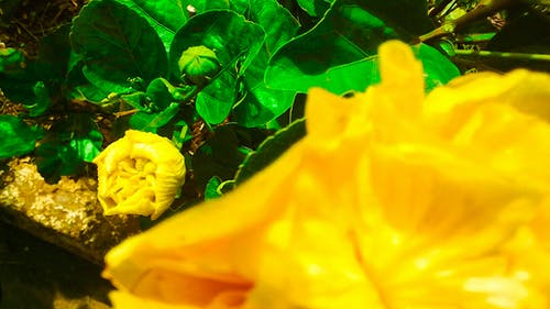 Free stock photo of blurred flower budding